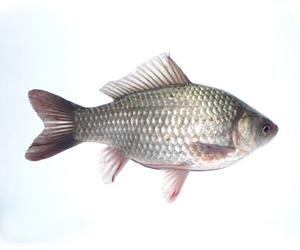 Бизнес на платной рыбалке