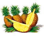 выращивание ананасов