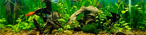 обслуживание аквариумов бизнес