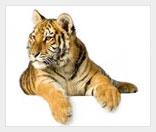 Частный зоопарк как бизнес
