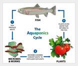 Бизнес на симбиозе растений и рыб