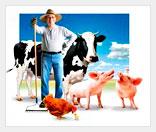 Организация фермерского рынка