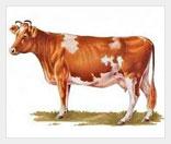 Аренда коров - дополнительный доход для фермы