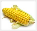 Выращивание кукурузы как бизнес