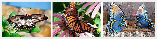 Как заработать на бабочках?