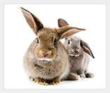 Бизнес на выращивании кроликов