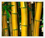 Бизнес на бамбуковых удочках