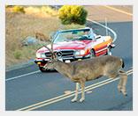 Прибор для отпугивания диких животных от дороги
