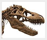 Бизнес на коммерческой палеонтологии
